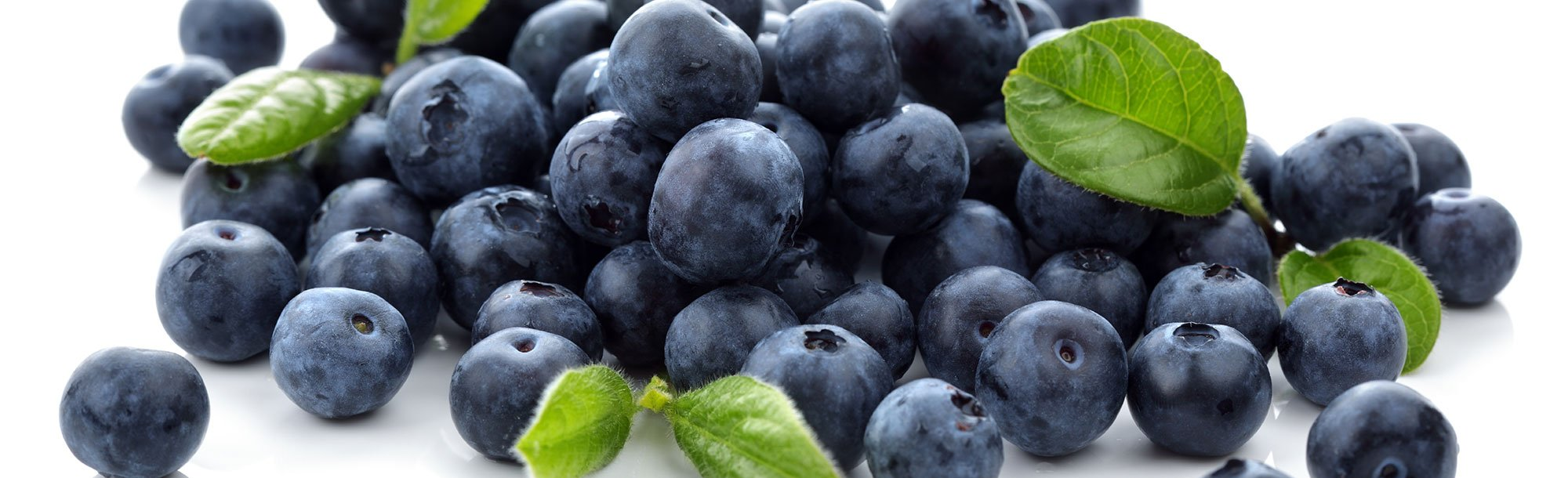 Blueberries Extract
