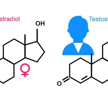What Are Hormones and How They Impact Your Daily Life?