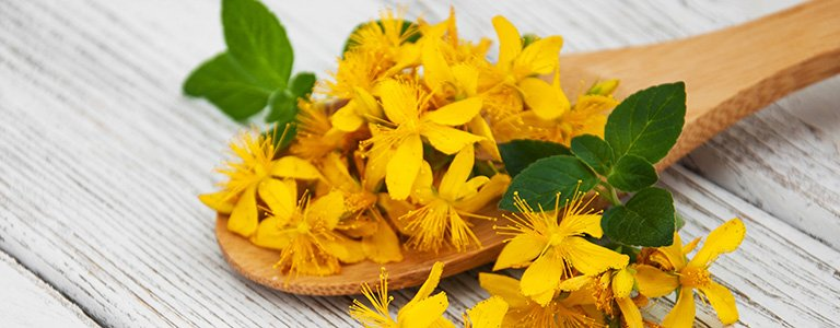 How Can St. John's Wort Improve Your Brain Health