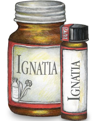 Ignatia St Ignatius Bean