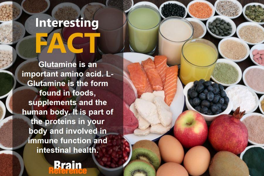 BodyQuick-BrainQuicken-L-Glutamine-Facts